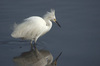 What Happens in Counselling?. Reflection_egret